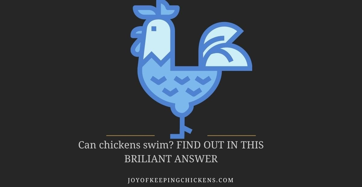 Can chickens swim? FIND OUT IN THIS BRILIANT ANSWER
