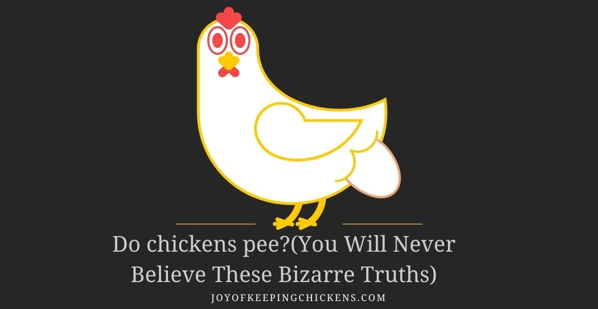 Do chickens pee?(You Will Never Believe These Bizarre Truths)