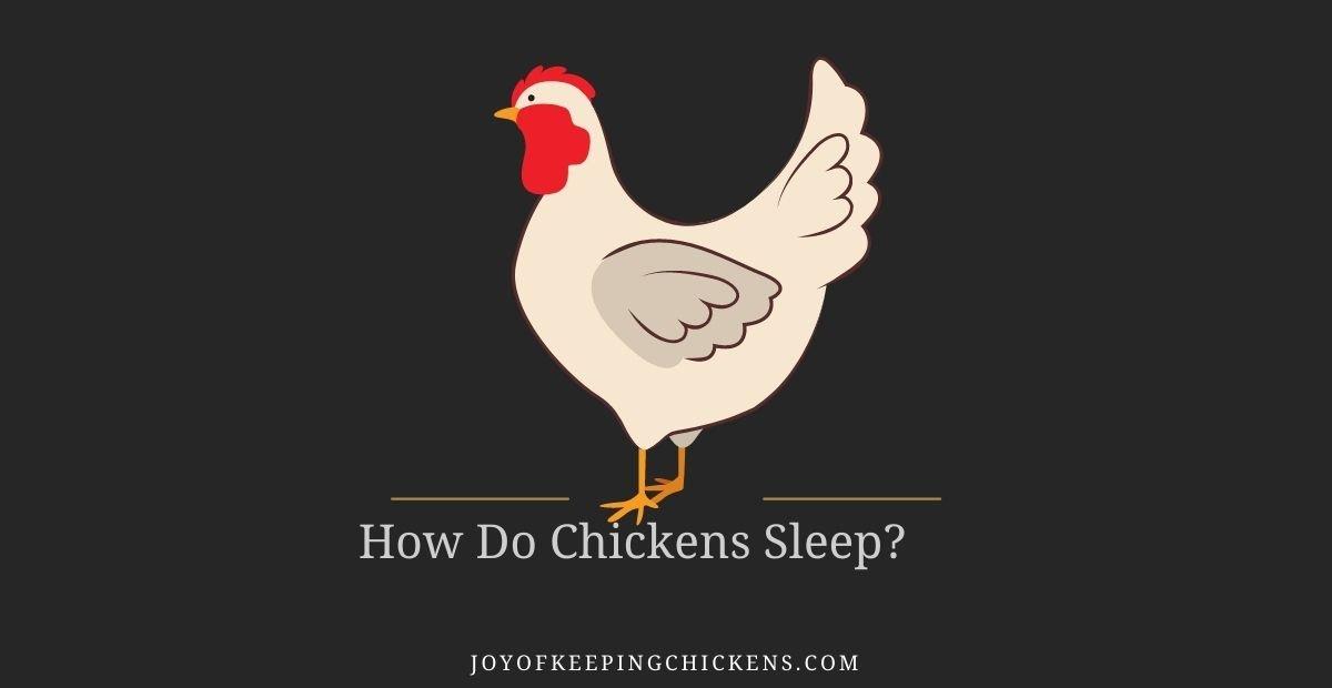 How Do Chickens Sleep?