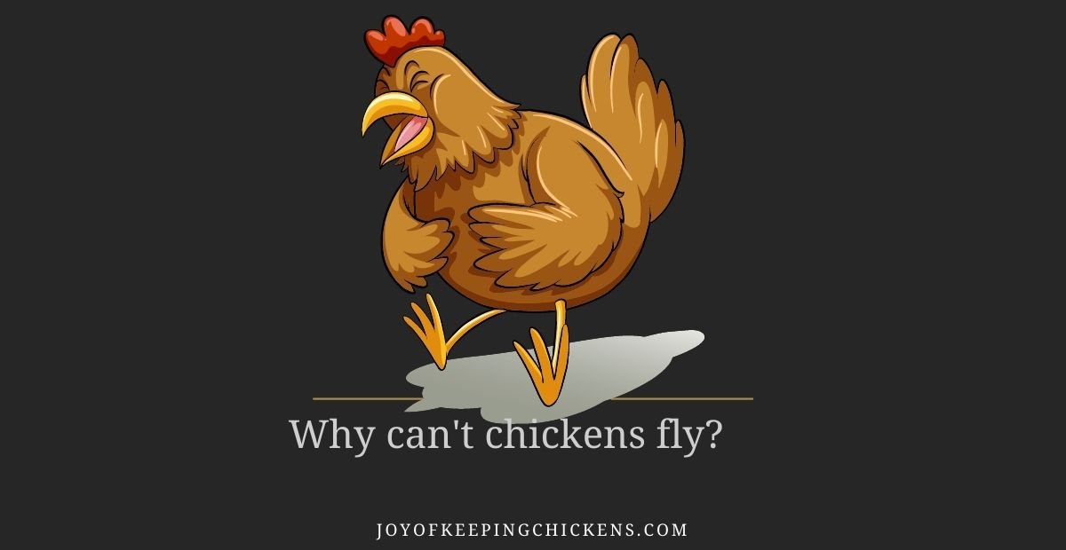 Why can't chickens fly?