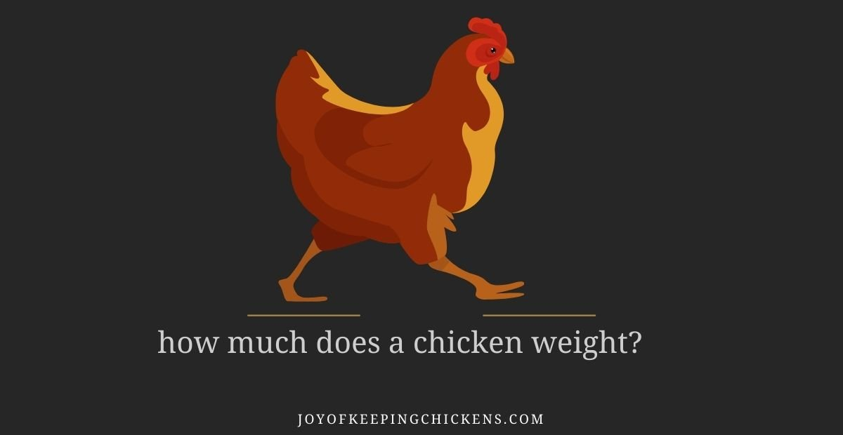 how much does a chicken weight?